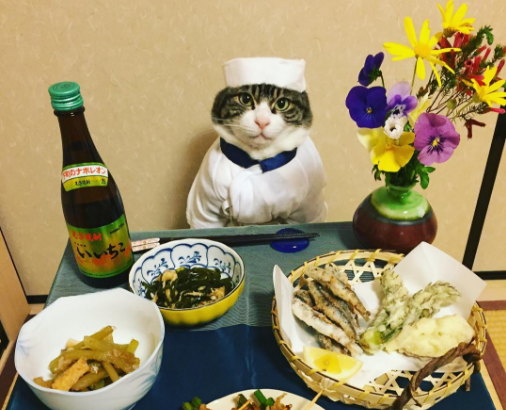 Maro, Chef Cat, Instagram